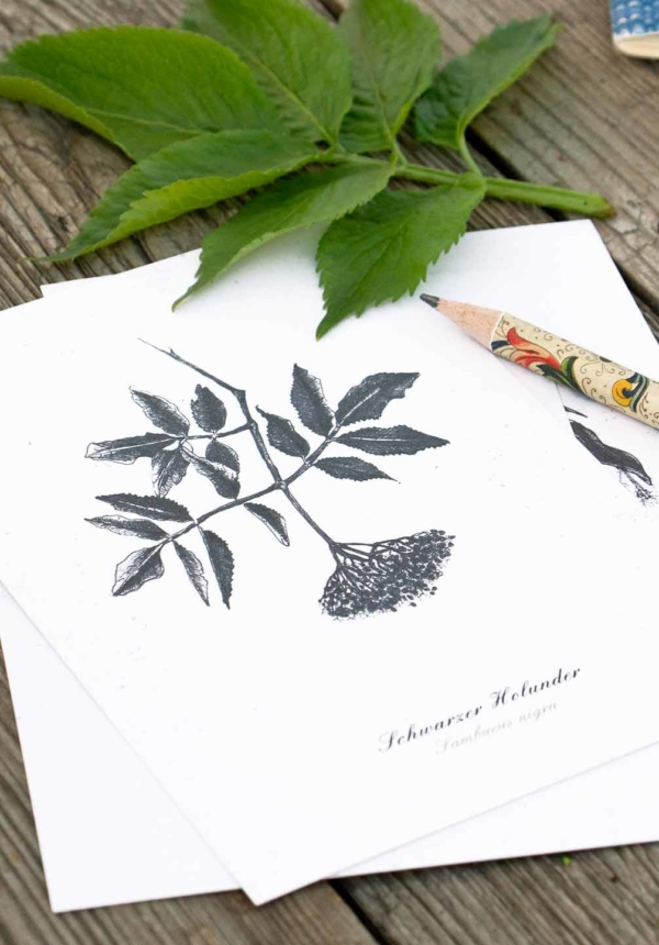 Kräuterpostkarte Holunder – illustrierte Kräuterpostkarten · Herbal Hunter